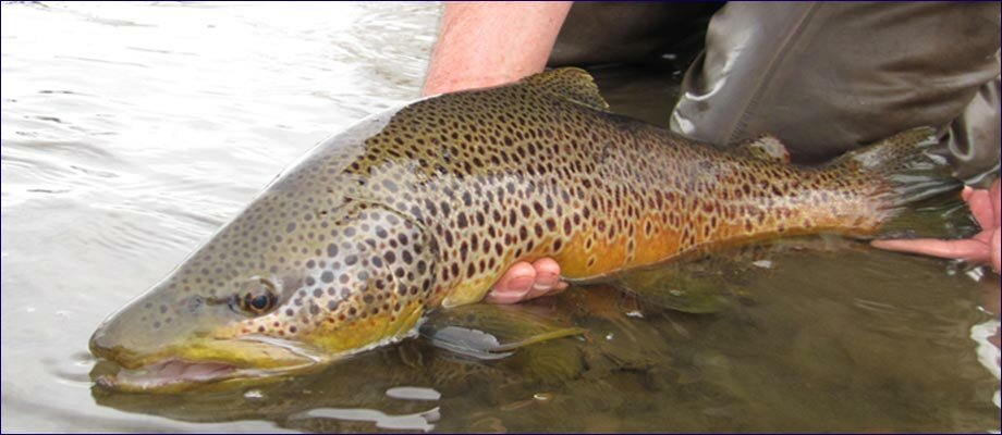 Big Brown Release !